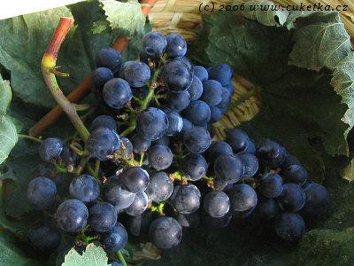 Odrůdy vín - mini atlas